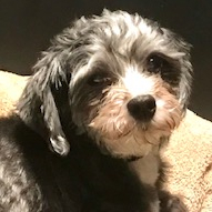 Coco in PA - Adoption Pending