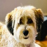 Ivy in PA - Adoption Pending
