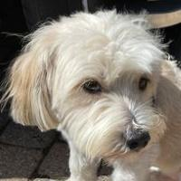 Murphy in NorCal - NEW ARRIVAL - No Applications Now
